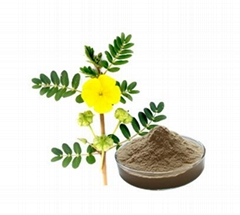 Chinese factory supply 100% Natural gmp tribulus terrestris seed extract