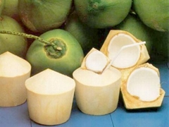 FRESH YOUNG COCONUT WITH HIGH QUALITY, COMPETITIVE PRICE
