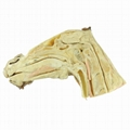 Median Sagittal Section of Horse Head
