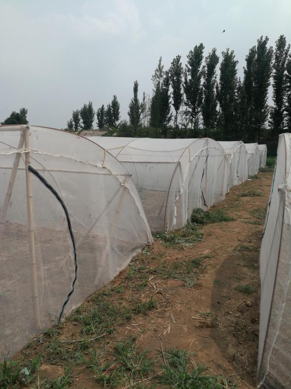 純料加厚的螞蚱養殖紗網 2