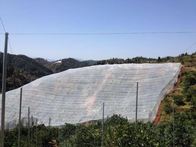 臍橙種植用的加厚防虫網 1