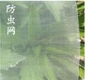 臍橙種植用的加厚防虫網 3