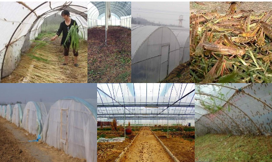廠家直銷加厚螞蚱養殖網棚 2