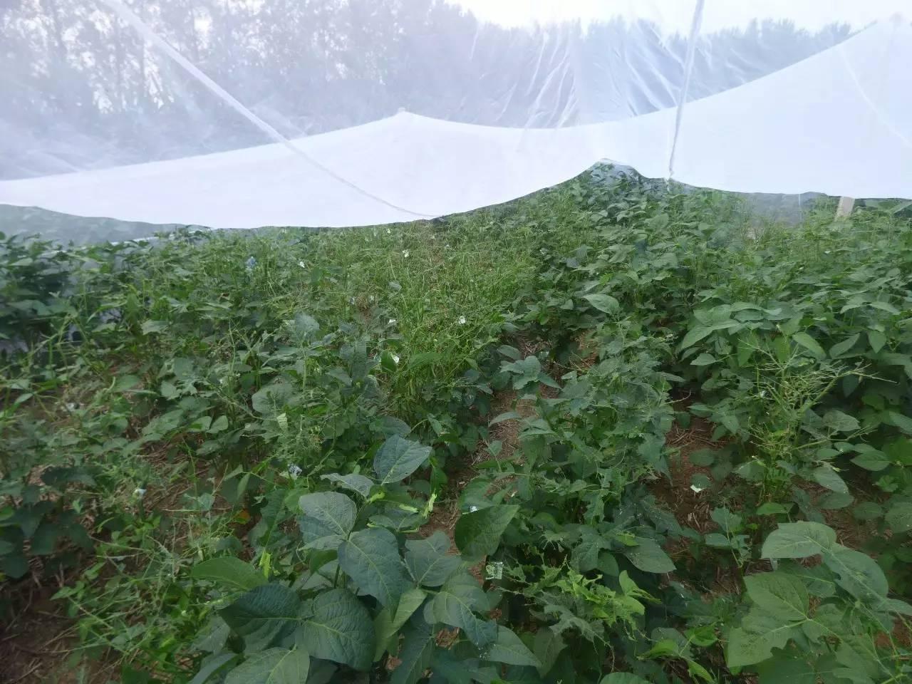 豆虫養殖紗網大量批發 1