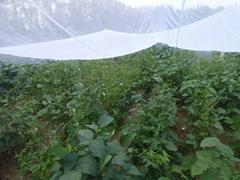 豆虫养殖纱网大量批发