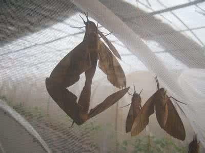 豆虫養殖紗網大量批發 3