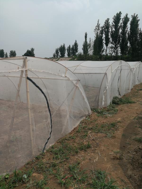 螞蚱養殖網棚成品製作 1