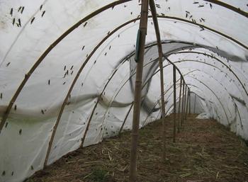 螞蚱養殖網棚成品製作 2