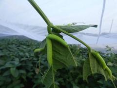 豆虫養殖紗網大量上市