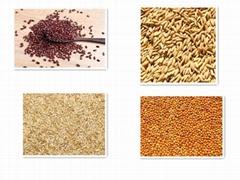 杨凌滕灿豆麦谷黍类种子