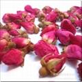 陕西滕灿花类种子出售 月季花 1