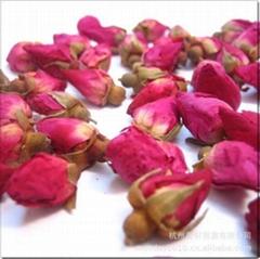 陕西滕灿花类种子出售 月季花