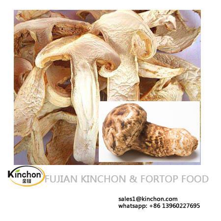 Wild Matsutake mushroom 1