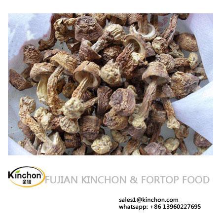 Dried Agaricus Mushroom 1