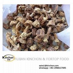 Dried Agaricus Mushroom