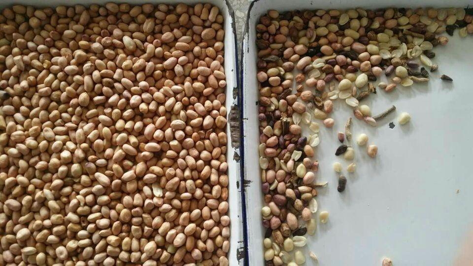 bean color sorter for chickpea or green bean sorting machine 3