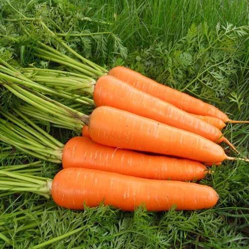 Carrot 3