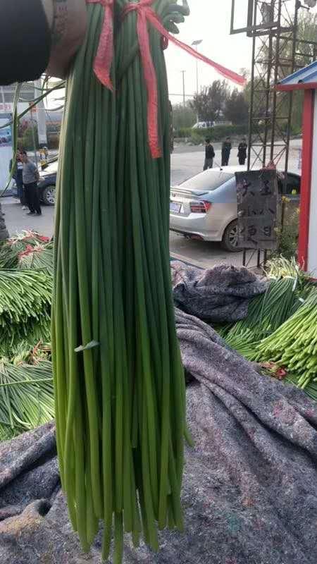 Garlic sprout 5