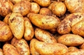 Organic New Harvest Fresh Potato 1
