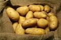 Organic New Harvest Fresh Potato 2