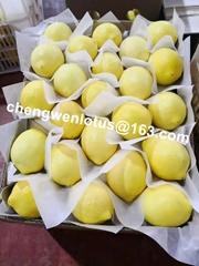 New fresh lemon