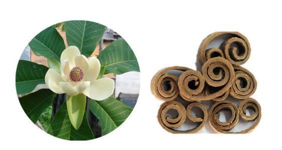 magnolia bark extract honokiol 2