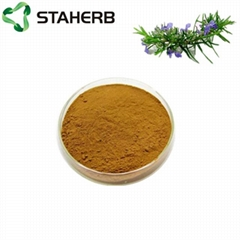 迷迭香提取物迷迭香酸5% Rosemary extract Rosmarinic acid 5%