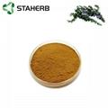 Rosemary extract Rosmarinic acid 5%