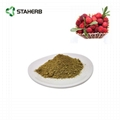 bayberry bark extract myricetin 98%