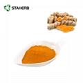 tumeric extract curcumin 3