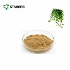 常春藤提取物常春藤总皂甙Ivy leaf extract  ivy saponins