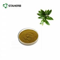 橄榄叶提取物橄榄苦甙Olive leaf extract Oleuropein