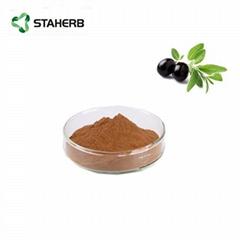橄榄叶提取物羟基酪醇Olive leaf extract Hydroxytyrosol