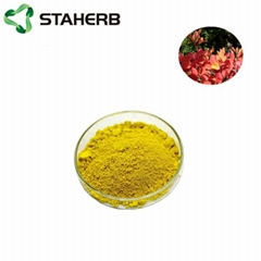 黃櫨提取物漆黃素Cotinus coggygria Scop extract Fiset