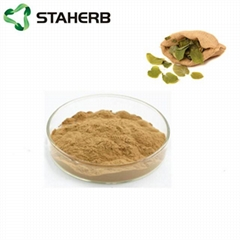 淫羊藿提取物epimedium extract Icariin 10%