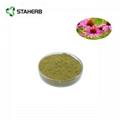 Echinacea Purpurea Extract Cichoric acid 2%