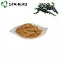 Rosemary extract carnosic acid 20%