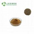 black tea extract  polypenols