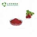 Red Beetroot Juice Powder beetroot extract