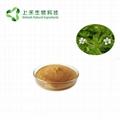 bacopa monnieri brahmi extract 50% bacoside 2