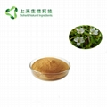 bacopa monnieri brahmi extract 50% bacoside 3