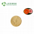 Barberton daisy extract powder