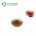 apple extract apple polypenols