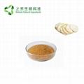 lion's mane mushroom extract 30%
