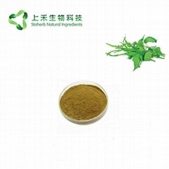 gymnema sylvestne extract Gymnemic Acid