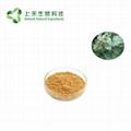 Great Burdock Achene Extract