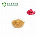 raspberry extract powder raspberry ketone