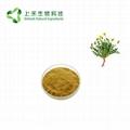 dandelion root extract