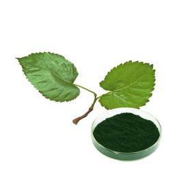 Mulberry Leaf-Extract Powder Sodium Copper Chlorophyll 1