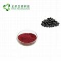 mulberry fruit juice powder